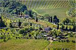 Vineyard, San Gimignano, Siena Province, Tuscany, Italy Stock Photo - Premium Rights-Managed, Artist: R. Ian Lloyd, Code: 700-06367911