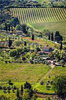 Vineyard, San Gimignano, Siena Province, Tuscany, Italy Stock Photo - Premium Rights-Managednull, Code: 700-06367912
