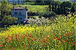 Flower Field and House, San Gimignano, Siena Province, Tuscany, Italy Stock Photo - Premium Rights-Managed, Artist: R. Ian Lloyd, Code: 700-06367919