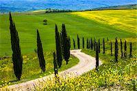 Montalcino, Tuscany, Italy Stock Photo - Premium Rights-Managednull, Code: 700-06367941