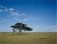 serengeti national park - Giraffe Stock Photo - Premium Royalty-Freenull, Code: 622-06370279