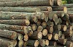 A wood pile at a sawmill. Western Cape Province, South Africa. Stock Photo - Premium Royalty-Free, Artist: Peter Christopher, Code: 682-06374173