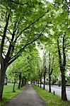 Allee in Oldenburg, Nordrhein-Westfalen, Germany Stock Photo - Premium Royalty-Free, Artist: Robert Harding Images, Code: 682-06374233