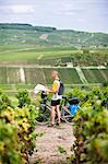 Cyclist with map in vineyard Stock Photo - Premium Royalty-Freenull, Code: 6102-06374458