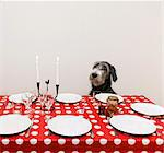 Dog sitting at table Stock Photo - Premium Royalty-Free, Artist: Ikon Images, Code: 6102-06374506