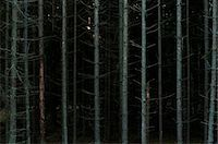 Bare tree trunks in dark forest Stock Photo - Premium Royalty-Freenull, Code: 698-06374706