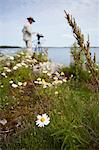 Photographer in field of Oxeye daisies by lake Stock Photo - Premium Royalty-Free, Artist: Robert Harding Images, Code: 698-06375199