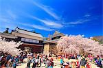 Thousand Cherry Blossom Festival, Nagano Prefecture, Japan Stock Photo - Premium Rights-Managed, Artist: Aflo Relax, Code: 859-06380191