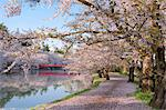 West Moat Of Hirosaki Park, Aomori Prefecture, Japan Stock Photo - Premium Rights-Managed, Artist: Aflo Relax, Code: 859-06380263