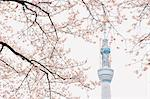 Tokyo Sky Tree (634M), Tokyo, Japan Stock Photo - Premium Rights-Managed, Artist: Aflo Relax, Code: 859-06380296