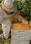 Beekeeper Removing Frame from Hive Stock Photo - Premium Rights-Managed, Artist: Burazin, Code: 700-06383084