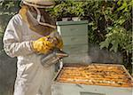 Beekeeper with Smoker Stock Photo - Premium Rights-Managed, Artist: Burazin, Code: 700-06383085