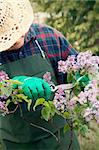 Spring garden concept. Male gardener is doing garden work around lilac flowers. Stock Photo - Royalty-Free, Artist: mythja                        , Code: 400-06384076
