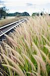 Flower foxtail weed and railway in the green nature Stock Photo - Royalty-Free, Artist: SweetCrisis                   , Code: 400-06386505