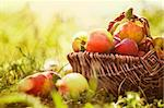 Organic apples in basket in summer grass. Fresh apples in nature Stock Photo - Royalty-Free, Artist: mythja                        , Code: 400-06388124