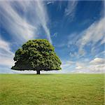 A Lone Tree with Blue Sky and Grass Stock Photo - Royalty-Free, Artist: Binkski                       , Code: 400-06388848