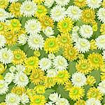 Seamless yellow white chrysanthemum flowers pattern backgrounds Stock Photo - Royalty-Free, Artist: 100ker                        , Code: 400-06391592