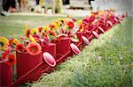 Watering cans with a row of red gerberas immediacy as an allegory of life Stock Photo - Royalty-Free, Artist: la_singularite                , Code: 400-06392217