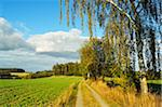Country Road and Birch Trees, Friedenfels, Bavaria, Germany Stock Photo - Premium Rights-Managed, Artist: Jochen Schlenker, Code: 700-06397561