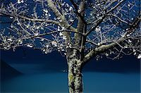 Tree at night in Asago, Hyogo Stock Photo - Premium Royalty-Freenull, Code: 622-06398086