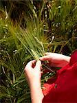 Farmer examining barley stalks in field Stock Photo - Premium Royalty-Free, Artist: Martin Förster, Code: 649-06400460