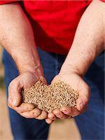 Farmer holding handful of barley seeds Stock Photo - Premium Royalty-Freenull, Code: 649-06400462