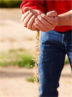 Farmer pouring handful of barley seeds Stock Photo - Premium Royalty-Freenull, Code: 649-06400463