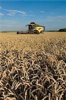 Harvester working in crop field Stock Photo - Premium Royalty-Freenull, Code: 649-06400717
