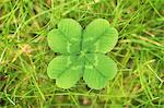 Close up of four leaf clover Stock Photo - Premium Royalty-Free, Artist: Ty Milford, Code: 649-06400882