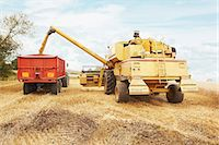 Tractor harvesting grains in crop field Stock Photo - Premium Royalty-Freenull, Code: 649-06401207