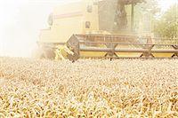 Tractor harvesting grains in crop field Stock Photo - Premium Royalty-Freenull, Code: 649-06401211