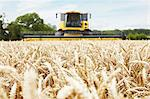 Harvester working in crop field Stock Photo - Premium Royalty-Free, Artist: Cultura RM, Code: 649-06401237