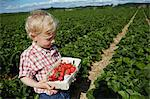 Boy picking strawberries in field Stock Photo - Premium Royalty-Free, Artist: Blend Images, Code: 649-06401291