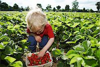 farm and boys - Boy picking strawberries in field Stock Photo - Premium Royalty-Freenull, Code: 649-06401298