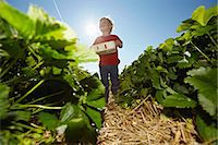 farm and boys - Boy picking strawberries in field Stock Photo - Premium Royalty-Freenull, Code: 649-06401299