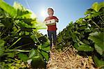 Boy picking strawberries in field Stock Photo - Premium Royalty-Free, Artist: Cultura RM, Code: 649-06401299