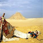 Great Pyramids of Giza and resting Camel, Egypt Stock Photo - Premium Royalty-Free, Artist: Damir Frkovic, Code: 6106-06402268