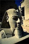 Temple of Luxor, Ramesses II Statue, Luxor, Egypt Stock Photo - Premium Royalty-Free, Artist: Siephoto, Code: 6106-06402427