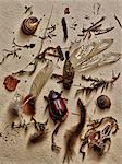 Insects and other elements from nature Stock Photo - Premium Royalty-Free, Artist: Westend61, Code: 614-06402698