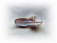 feather  close-up - A feather Stock Photo - Premium Royalty-Freenull, Code: 614-06402702