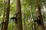 Chairs attached to tree trunks high up in forest Stock Photo - Premium Royalty-Free, Artist: AWL Images, Code: 614-06402945