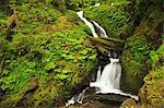 Seasonal creek, Graves Creek area, Olympic National Park, Washington, USA Stock Photo - Premium Royalty-Free, Artist: David & Micha Sheldon, Code: 614-06403107