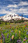 Summer alpine wild flower meadow, Mount Rainier National Park, Washington, USA Stock Photo - Premium Royalty-Free, Artist: Beth Dixson, Code: 614-06403116