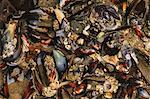 Mussel shells, Shi-Shi Beach, Olympic National Park, Washington, USA Stock Photo - Premium Royalty-Free, Artist: Photocuisine, Code: 614-06403123