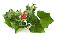 Holly and Ivy Stock Photo - Premium Royalty-Freenull, Code: 618-06405261
