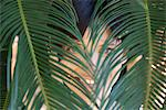 Woman looking through palm leaves Stock Photo - Premium Royalty-Free, Artist: Garry Black, Code: 633-06406363