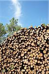 Pile of Logs, Lacanau, Gironde, Aquitaine, France Stock Photo - Premium Royalty-Free, Artist: photo division, Code: 600-06407758