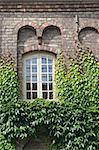 Wall of a house with window covered with ivy Stock Photo - Royalty-Free, Artist: Goodday                       , Code: 400-06408116