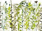 Natural wild plants and weeds silhouettes set  seamless horizontal vector background. Stock Photo - Royalty-Free, Artist: Sylverarts                    , Code: 400-06409560