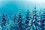 snowfall over mountain winter forest Stock Photo - Royalty-Free, Artist: yuriz                         , Code: 400-06424700